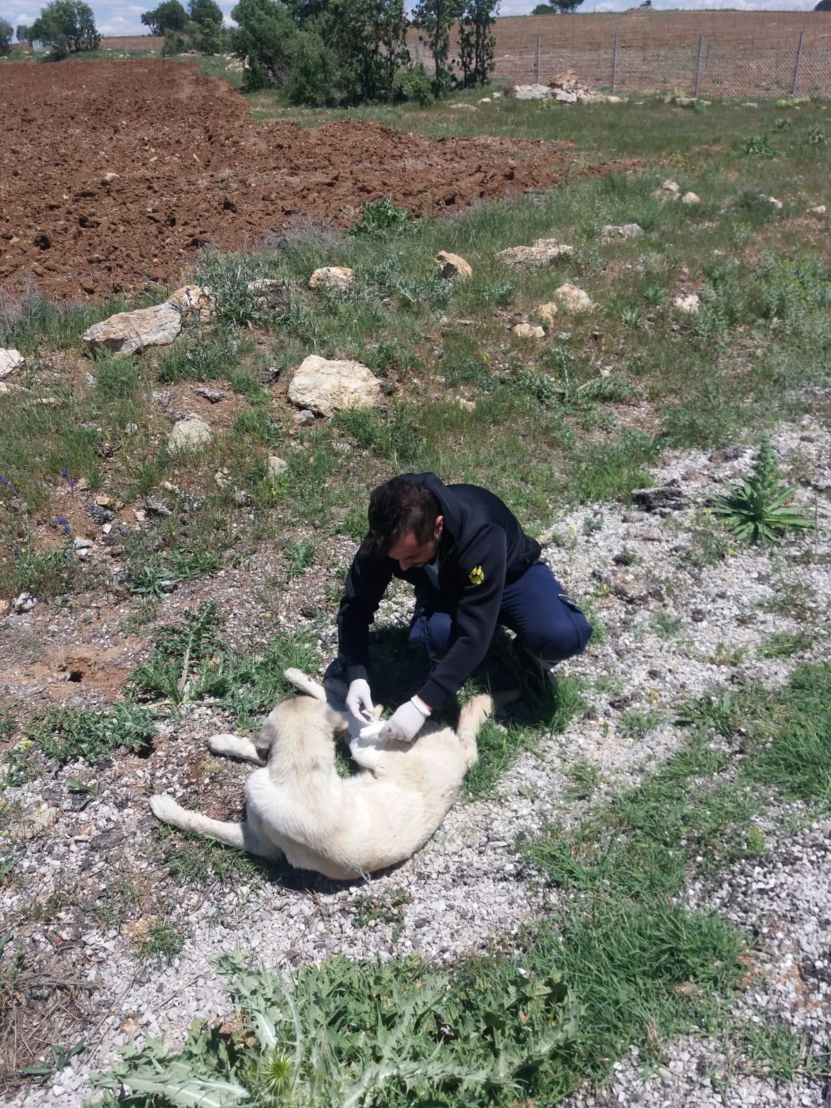 köpeğe ilk yardım