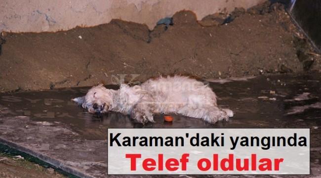 Karaman'daki yangında köpek ile muhabbet kuşları telef oldu