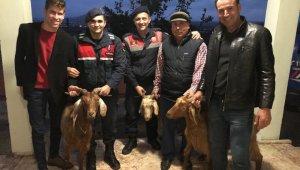 Çaldıkları 3 keçiyi satarak içki aldılar