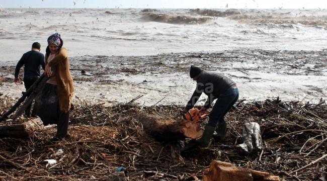 Erdemli'de selin getirdiği odunlar kapışılıyor