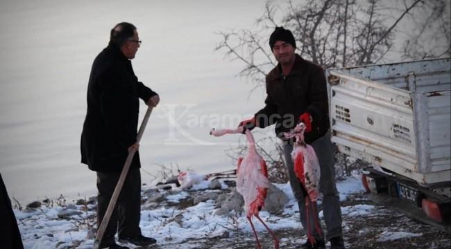 Halkapınar'daki İvriz Barajı'nda 12 flamingo ölü bulundu
