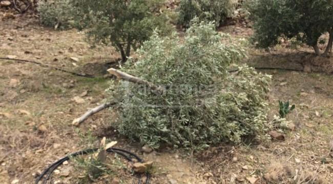 Silifke'de bahçeye saldırı