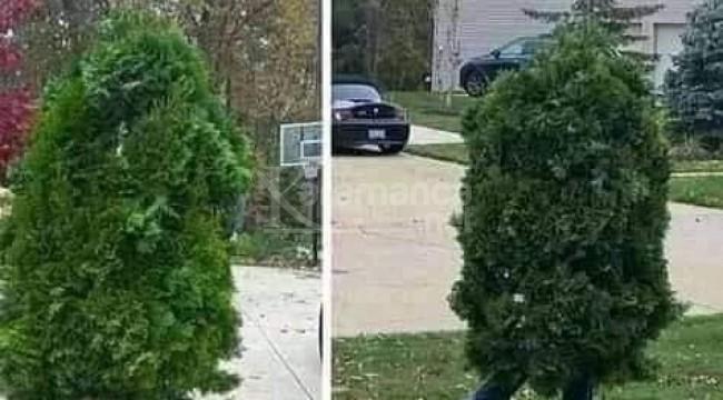 Sokağa çıkma yasağını delen yürüyen ağaç yakalandı