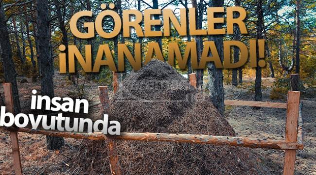 Türkiye'nin O ilinde ormancılar gözlerine inanamadı