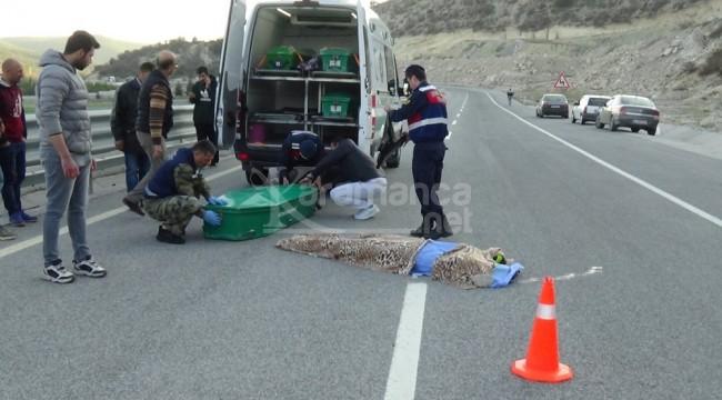 Çavdarhisar yolundaki kazada Adil Bayram Tunç ve Volkan Türk öldü