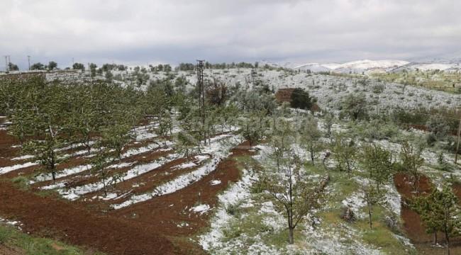 Hadim'deki kiraz bahçelerini kar vurdu
