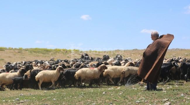 Yörükler 80 bin küçükbaş hayvanla Karaman sınırında