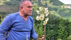 Bu çiçeği kopartana 73 bin lira ceza
