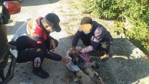 Çuvala doldurdukları köpek yavrularını dereye atacaklardı