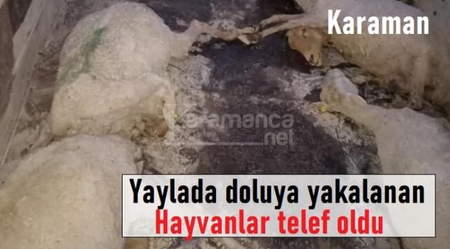 Karaman'da yaylada doluya yakalanan hayvanlar telef oldu
