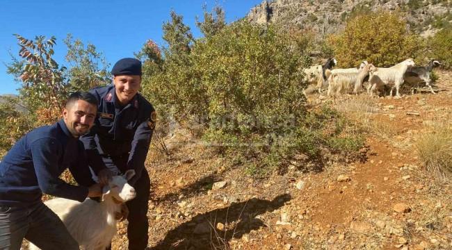 Jandarma kayıp keçileri drone ile buldu