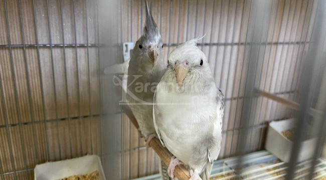 Papağan çiftliğine operasyon