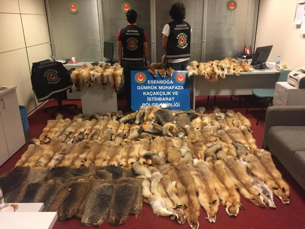 Esenboğa Havalimanı'nda 350 bin liralık kunduz ve tilki postu ele geçirildi