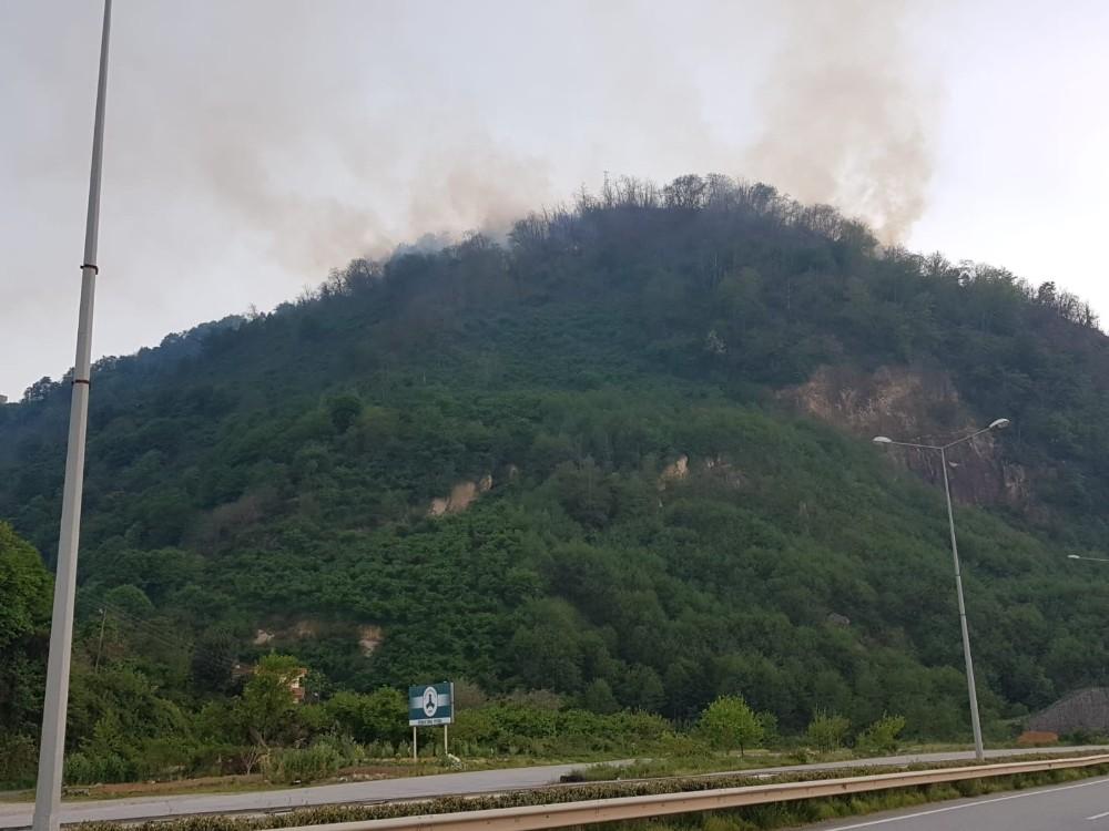 Ardeşen'de orman yangını