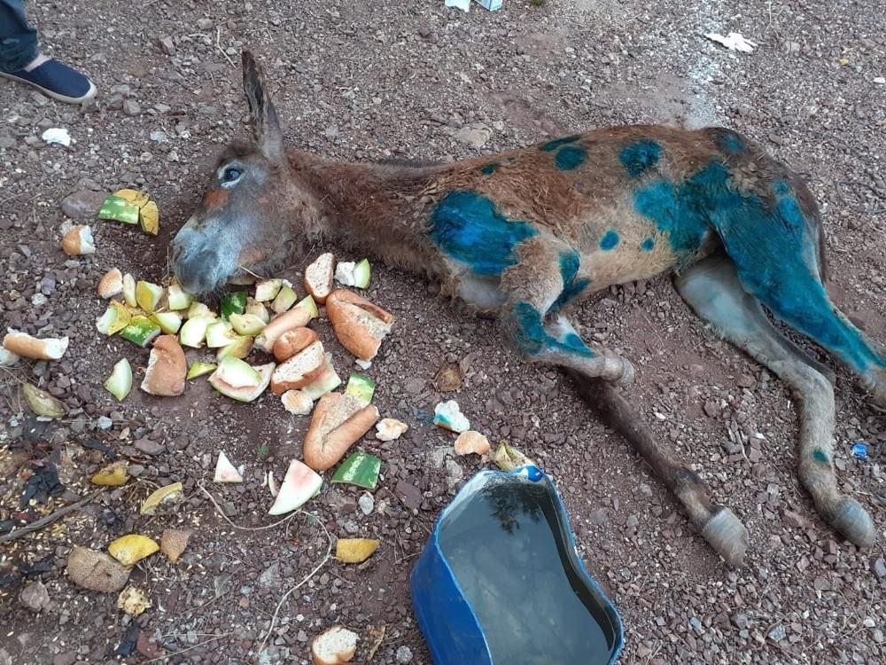 Eşeği halıya sarıp ormanda ölüme terk ettiler